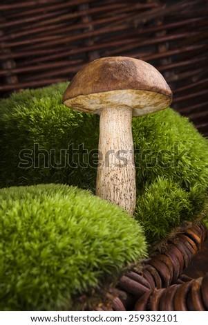 Mushroom picking. Single mushroom with moss in brown wooden background. Seasonal mushrooming.  - stock photo