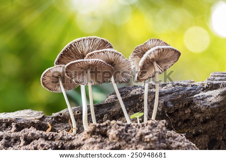 mushroom with blur background - stock photo