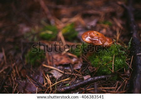 Mushrooming in a rainy forest. Textures. Dry pine needles, moss, mushroom, bark and branch of pine - stock photo