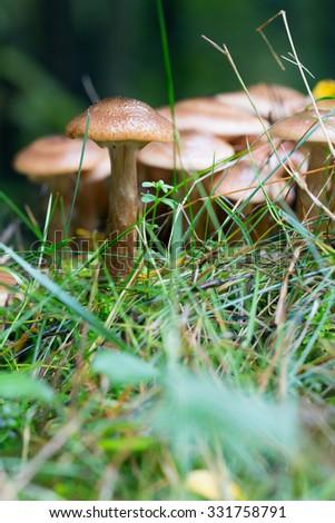 mushrooms - stock photo