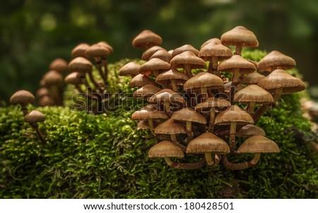 Mushrooms and moss - stock photo