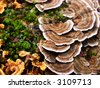 mushrooms and mosses growing on a rotting trunk in the forest - stock photo
