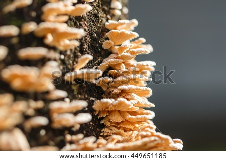 Mushrooms, fungi. - stock photo