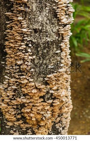 Mushrooms, fungi in nature. - stock photo