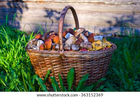 Mushrooms in the basket/Leaning basket with mushrooms  - stock photo