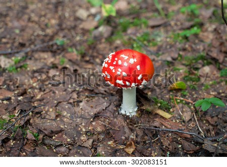 mushrooms in the forest - stock photo