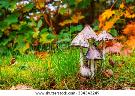 Mushrooms in the forest in the fall - stock photo