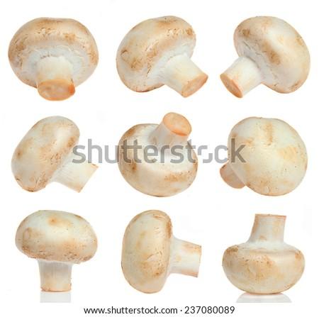 Mushrooms isolated on white set - stock photo