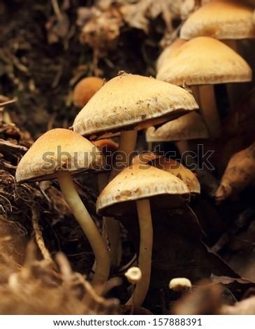 mushrooms macro - stock photo