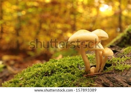 Mushrooms on a stump covered with moss in autumn forest. - stock photo