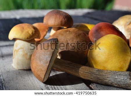 mushrooms on a wooden surface