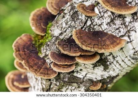 Mushrooms on the white background - stock photo