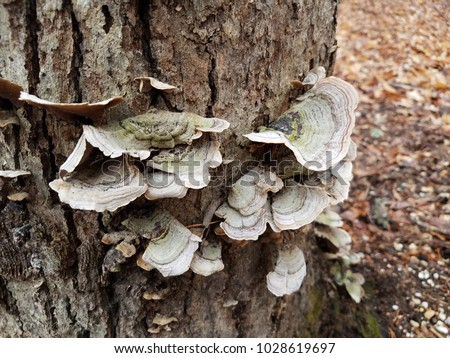 mushrooms or fungus on a tree