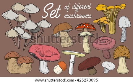 Mushrooms set. illustration of different types . Cep and boletus luteus. Saffron milk and death cap, morel and gyromitra, armillaria. Chanterelle and champignon.  - stock photo