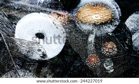 Mushrooms with spore print and leaves in an artistic overlay for a dream-like look. - stock photo