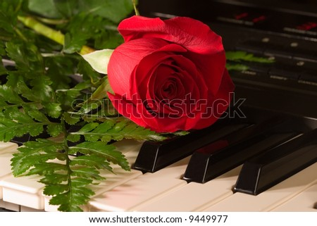 musical rose - stock photo