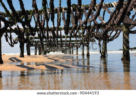 mussel farming on the coast of opal in the north of France - stock photo