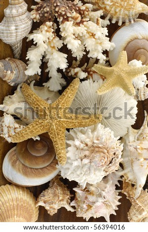mussels and starfish background - stock photo
