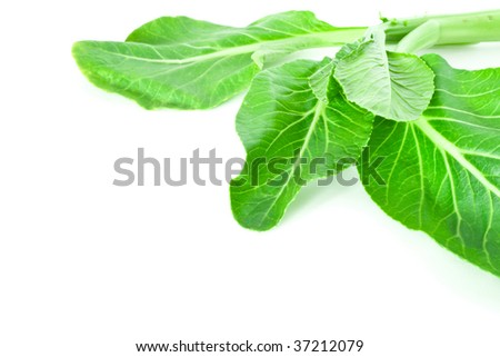 Mustard green isolated on white background