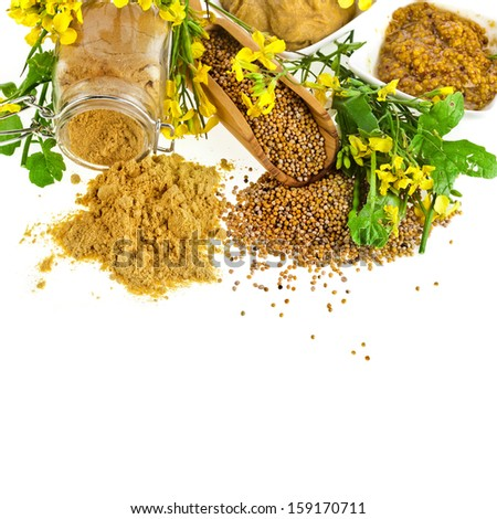 Mustard  jar and mustard powder spoon, seeds scoop, with fresh mustard flower on white - stock photo
