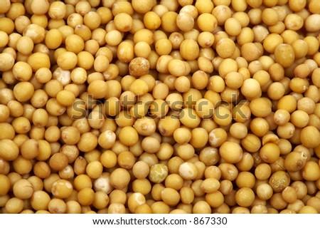 Mustard seeds - stock photo
