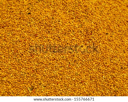Mustard seeds background (in Istanbul spice market) - stock photo