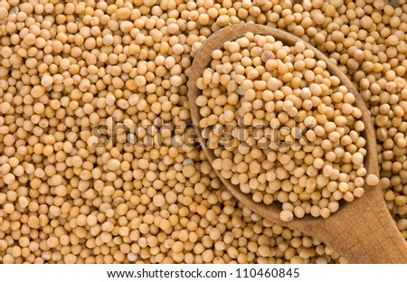 Mustard spices and spoon as  background