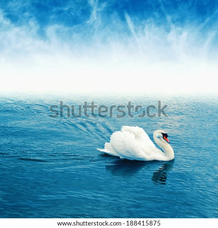Mute swan (Cygnus olor) floating on the surface of a lake. - stock photo
