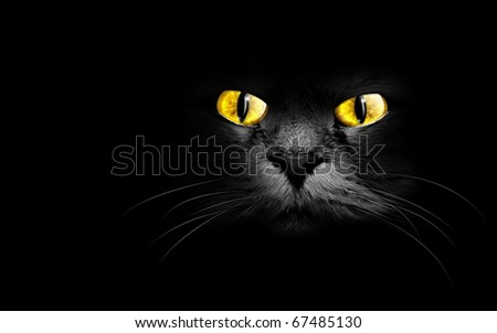 muzzle a black cat in the dark - stock photo