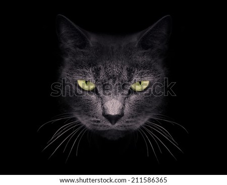 Muzzle a cat on a black background. - stock photo