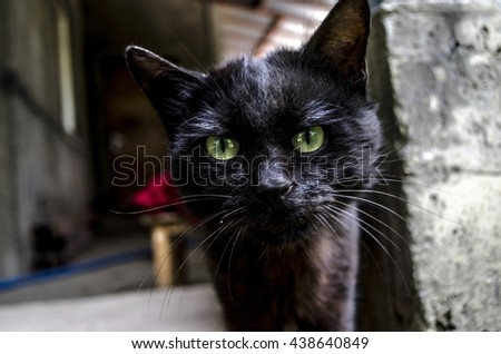 Muzzle black cat from surprised big green eyes - stock photo
