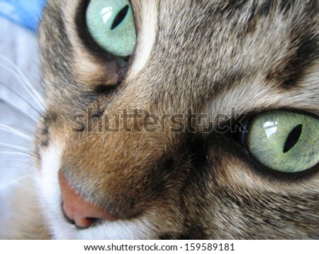 Muzzle cat with big eyes looking At Camera