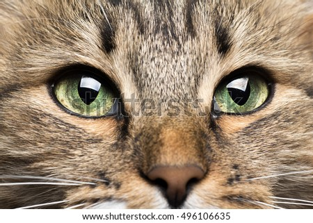 muzzle of beautiful red cat with green eyes close-up