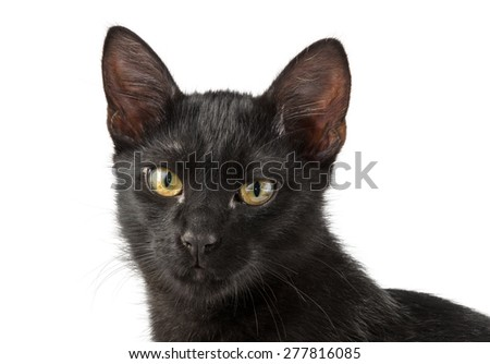 muzzle of black cat with yellow eyes - stock photo