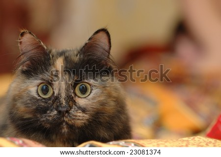 Muzzle of cat lying on the bed - stock photo