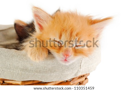 muzzle of tiny red kitten, sleeping in a basket