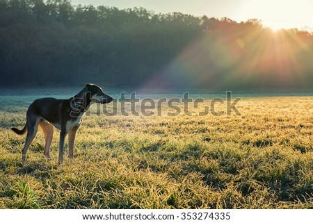My dog in a frozen morning looking in the field - stock photo