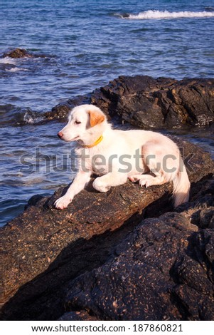 My dog is on the rocks and the beach is beautiful - stock photo