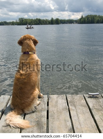 My dog must have sat there motionless for an hour watching these fishermen - stock photo