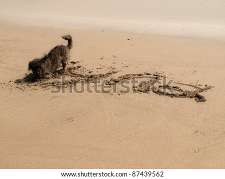 my dog writing her name on the beach - stock photo