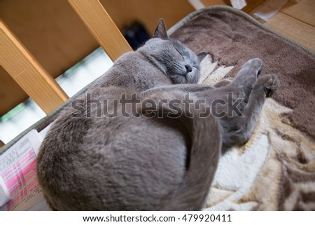 My gray cat in room