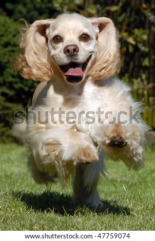 My pet runing on the grass - stock photo