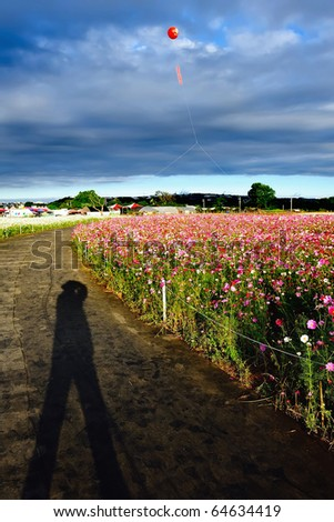 My shadow on pathway in flower field with blue sky at dawn. - stock photo