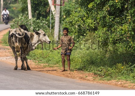 Mysore, India - October 27, 2013: Young laughing teenaged boy holds black and white cow on string along rural road in Ranganathapur hamlet. Green background with faded motorcycle in distance.