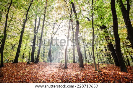 Mysterious autumn forest landscape with sunbeams.