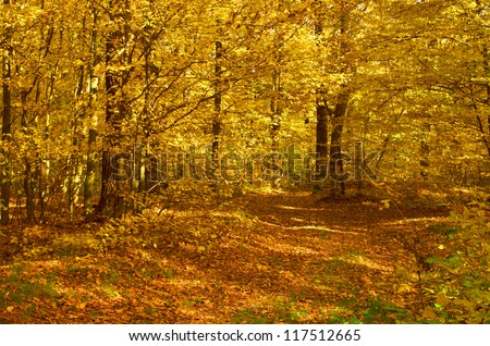 Mysterious autumn forest on a bright sunny day