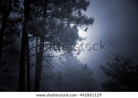 Mysterious backlit foggy pine forest