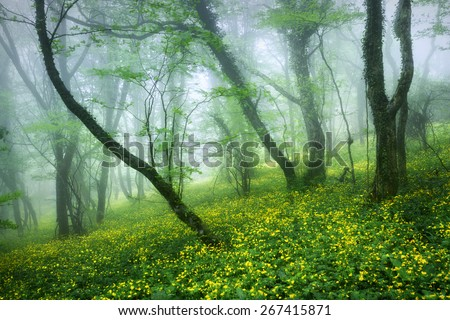 Mysterious beautiful forest in fog with green leaves and yellow flowers. Beautiful spring morning in Crimea. Magical atmosphere. Fairytale