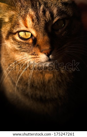 Mysterious cat waiting something - stock photo