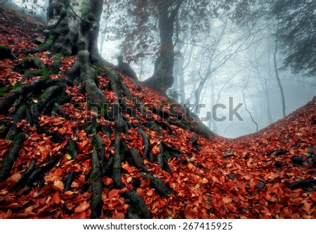 Mysterious dark autumn forest in blue fog with red leaves, trees and branches . Autumn morning in Crimea (Mountain Ai-Petry) - stock photo